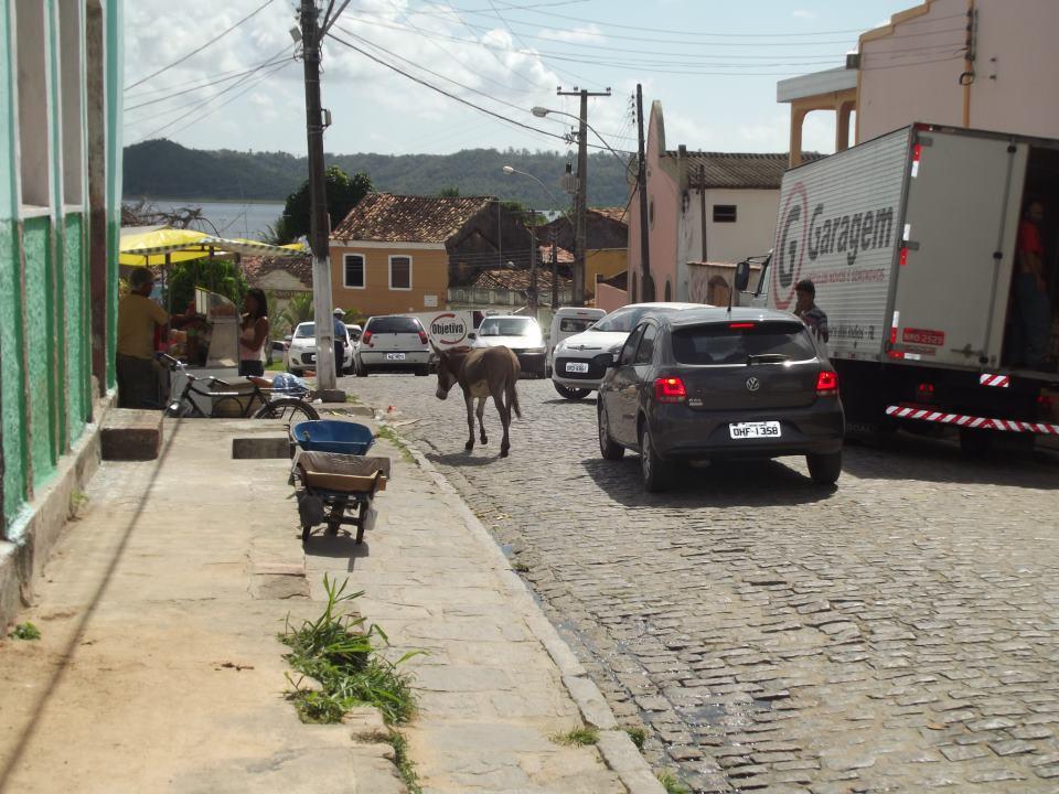 Motoristas circulam em meio aos jumentos no centro da cidade. (foto: Gabriel Santos)