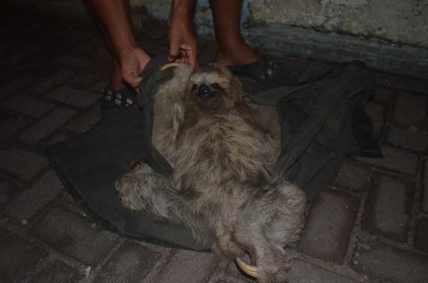 Animal deverá ser encaminhado para o IBAMA. (foto: André do MN)