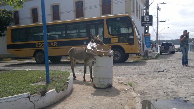 Sacolas de lixo são reviradas durante o trajeto dos animais.