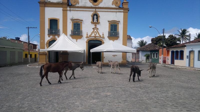Animais passeavam livremente pelo Largo da Matriz. (foto: Marechal Notícias)