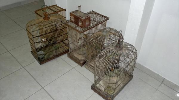 Gaiolas serão destruídas após a soltura dos pássaros.
