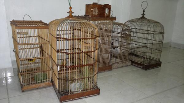Animais serão entregues ao IBAMA. (foto: Marechal Notícias)
