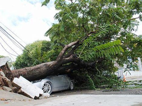 Árvore caiu sobre veículo no Stella Maris