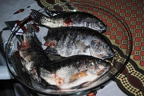 Pescador mostra peixe contaminado (AL24hs)