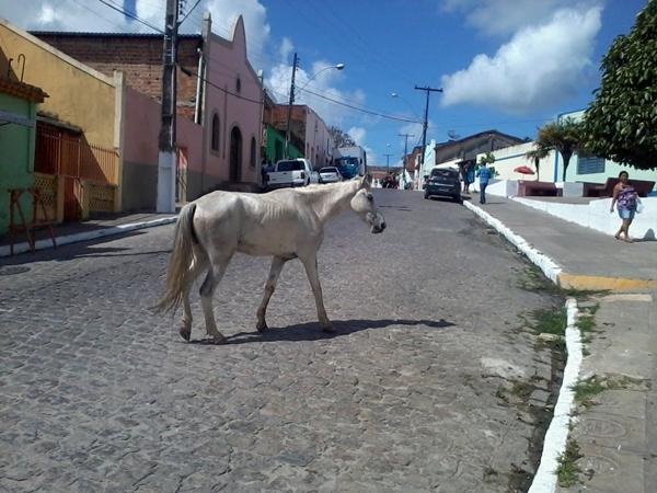 Animal perambulava pelo centro histórico deodorense. (foto: André do MN)