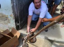 Sandro do Real Deodorense ajudou no resgate do animal. (Foto: André do MN)