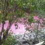 IMA investiga rio cor de rosa