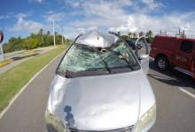 Impacto provocou grande avaria na frente do veículo. O cavalo morreu.